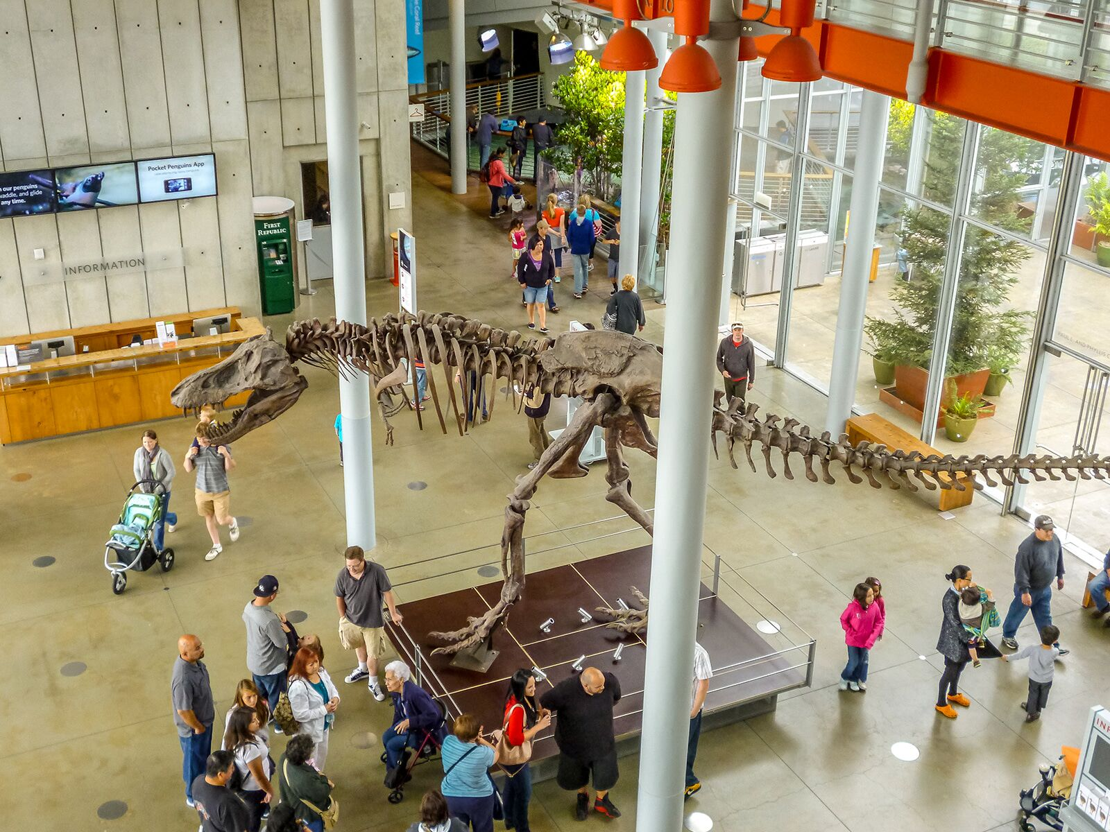 skeleton of tyrannosaurus rex in the lobby of the california academy of sciences
